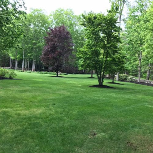 Green Horizons lawn care and maintenance